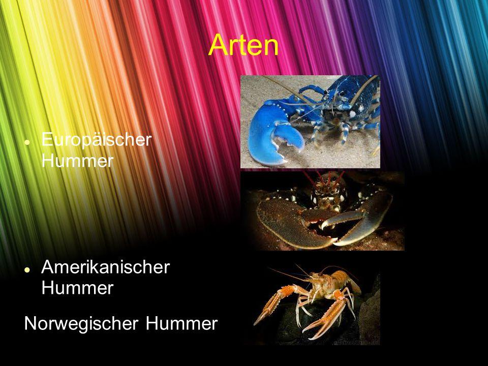 Europäischer Hummer Amerikanischer Hummer Norwegischer Hummer Arten