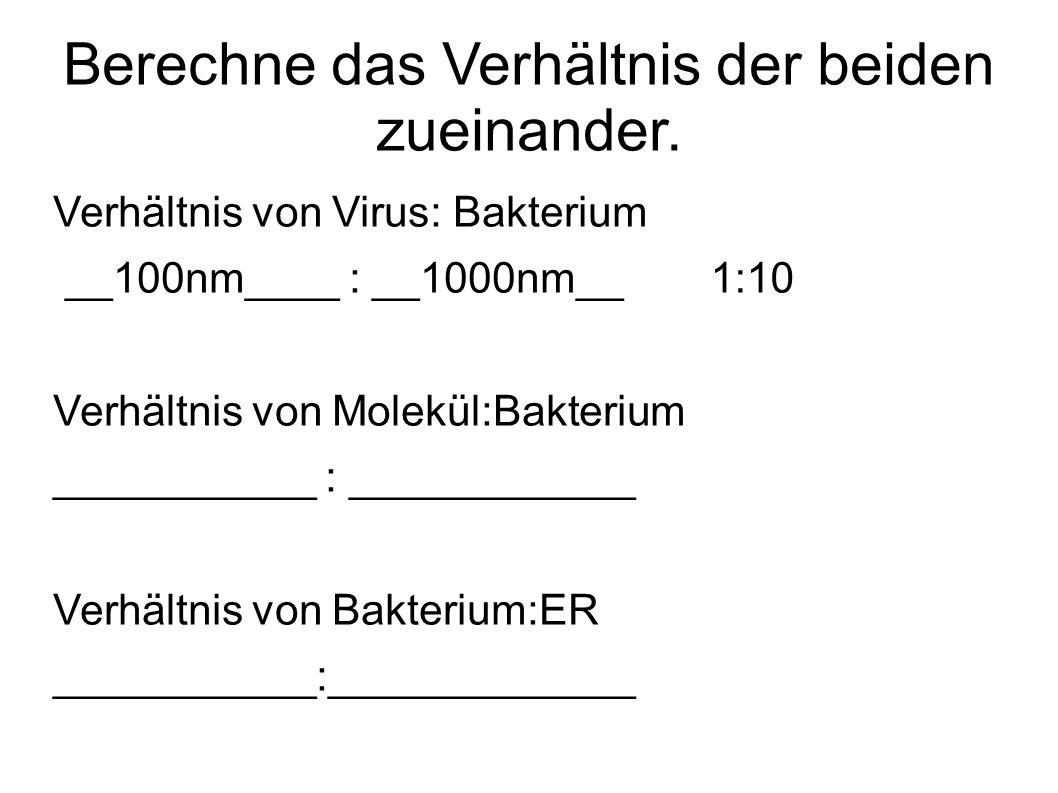 Berechne das Verhältnis der beiden zueinander. Verhältnis von Virus: Bakterium __100nm____ : __1000nm__ Verhältnis von Molekül:Bakterium ___________ :