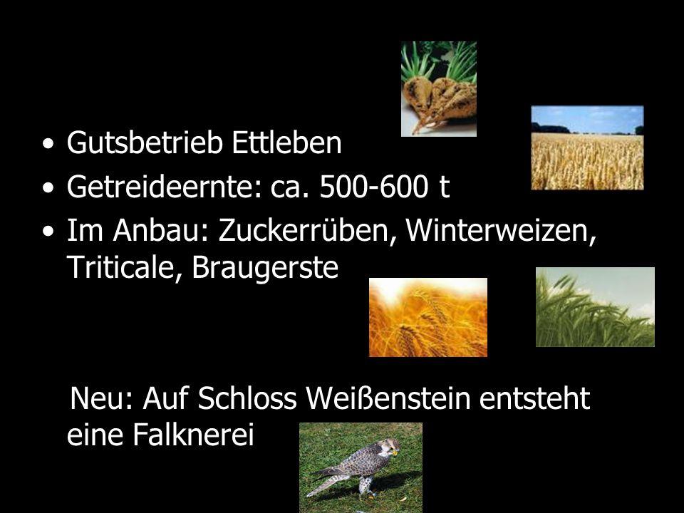 Gutsbetrieb Ettleben Getreideernte: ca. 500-600 t Im Anbau: Zuckerrüben, Winterweizen, Triticale, Braugerste Neu: Auf Schloss Weißenstein entsteht ein