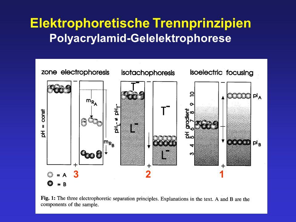 Elektrophoretische Trennprinzipien Polyacrylamid-Gelelektrophorese 312