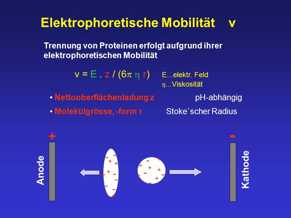Elektrophoretische Mobilität v Trennung von Proteinen erfolgt aufgrund ihrer elektrophoretischen Mobilität + + + + - - - - - - - + + + + + + - - - - +