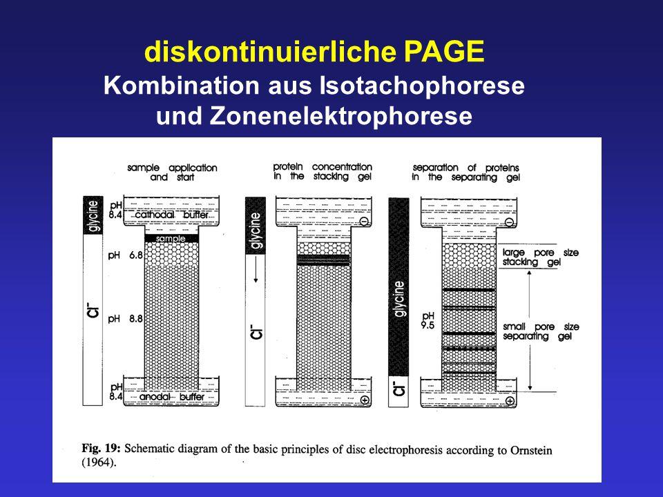 diskontinuierliche PAGE Kombination aus Isotachophorese und Zonenelektrophorese