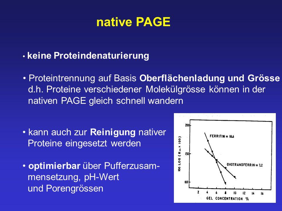 native PAGE keine Proteindenaturierung Proteintrennung auf Basis Oberflächenladung und Grösse d.h. Proteine verschiedener Molekülgrösse können in der