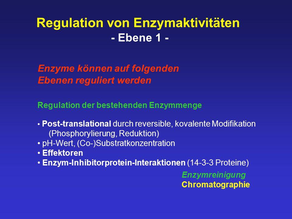 Regulation der bestehenden Enzymmenge Post-translational durch reversible, kovalente Modifikation (Phosphorylierung, Reduktion) pH-Wert, (Co-)Substratkonzentration Effektoren Enzym-Inhibitorprotein-Interaktionen (14-3-3 Proteine) Regulation von Enzymaktivitäten - Ebene 1 - Enzyme können auf folgenden Ebenen reguliert werden Enzymreinigung Chromatographie
