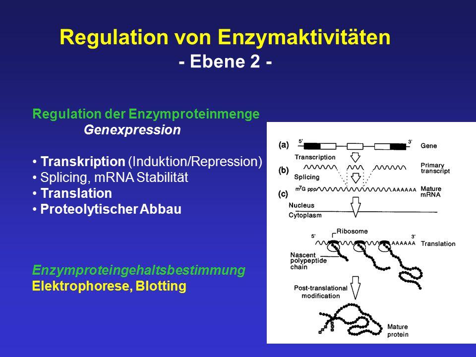 Regulation von Enzymaktivitäten - Ebene 2 - Regulation der Enzymproteinmenge Genexpression Transkription (Induktion/Repression) Splicing, mRNA Stabilität Translation Proteolytischer Abbau Enzymproteingehaltsbestimmung Elektrophorese, Blotting