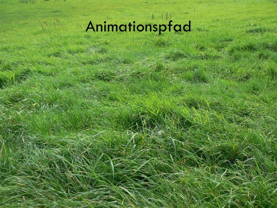 Animationspfad