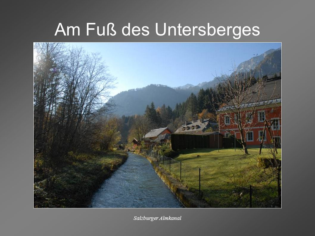 Salzburger Almkanal Kopfweiden am Almkanal