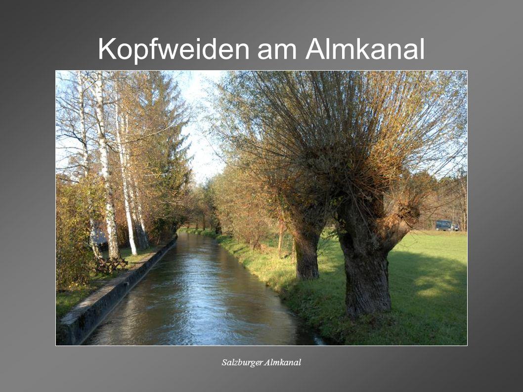 Salzburger Almkanal Rad- und Wanderwege