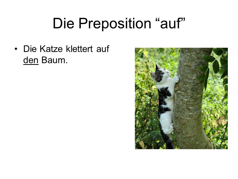 Die Preposition auf Die Katze klettert auf den Baum.
