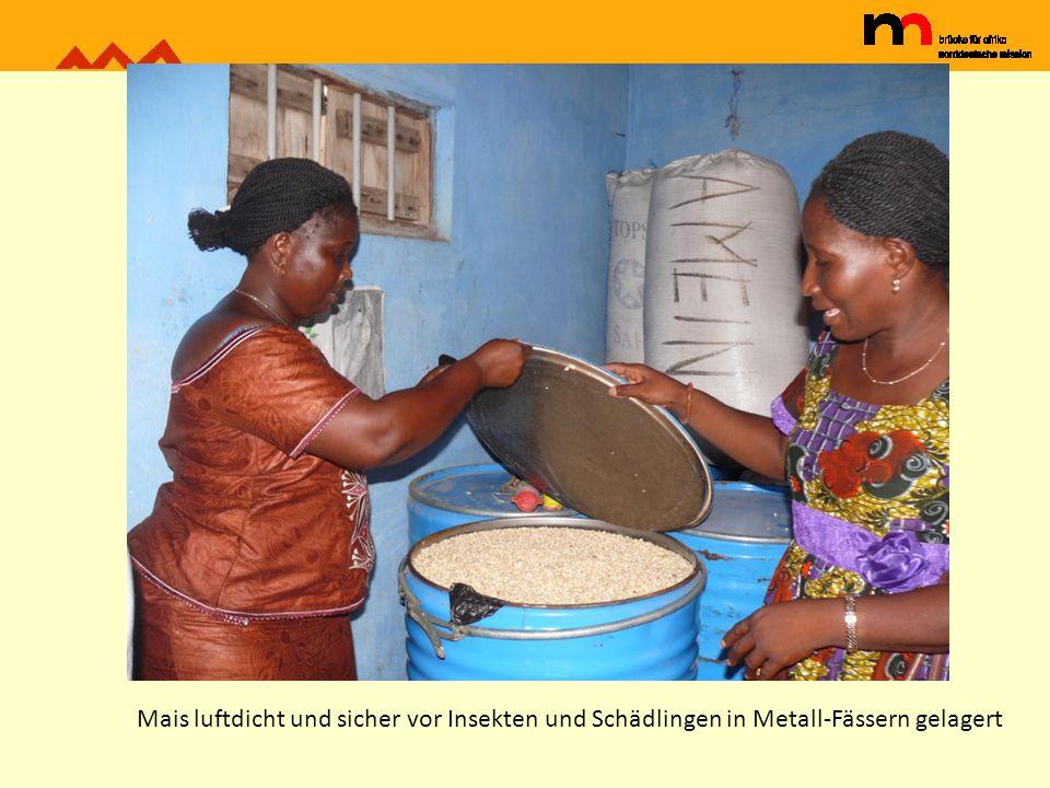Mais luftdicht und sicher vor Insekten und Schädlingen in Metall-Fässern gelagert