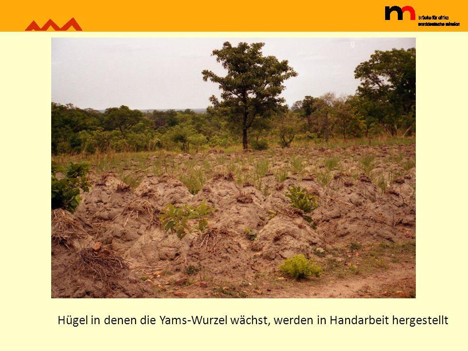 Hügel in denen die Yams-Wurzel wächst, werden in Handarbeit hergestellt