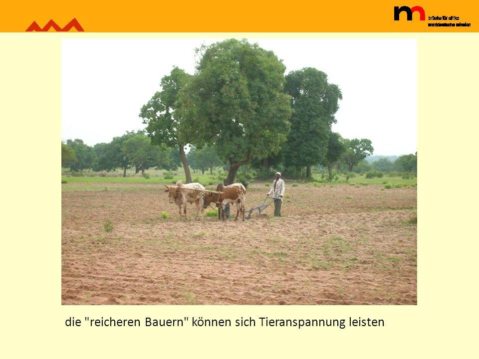 die reicheren Bauern können sich Tieranspannung leisten