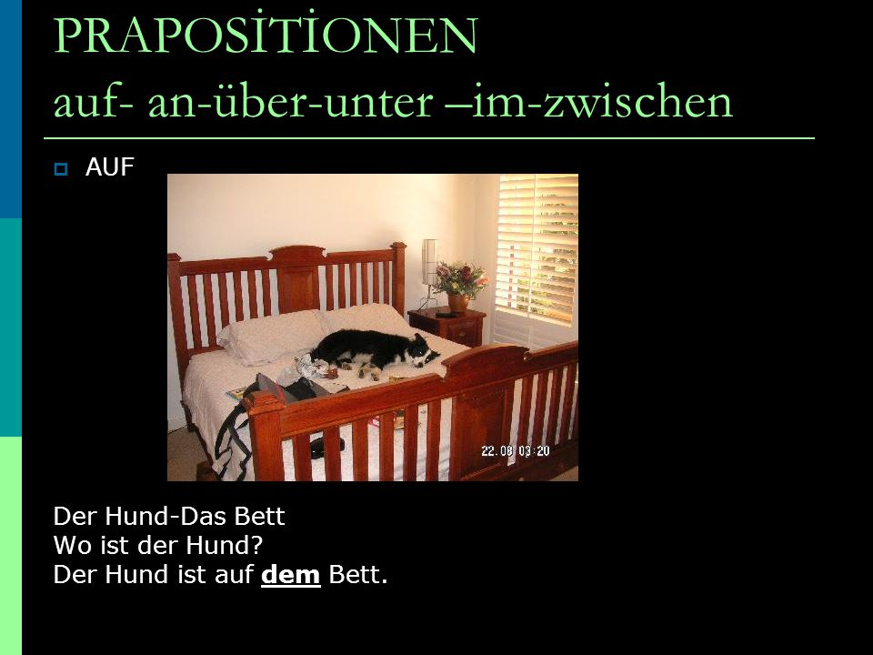 WO? DATİV PRAPOSİTİONEN auf- an-über-unter –im-zwischen  AUF Der Hund-Das Bett Wo ist der Hund? Der Hund ist auf dem Bett.