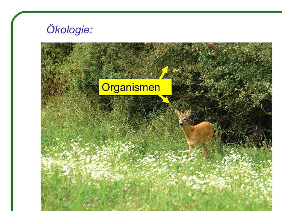 Organismen
