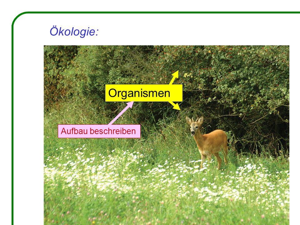 Ökologie: Organismen Aufbau beschreiben