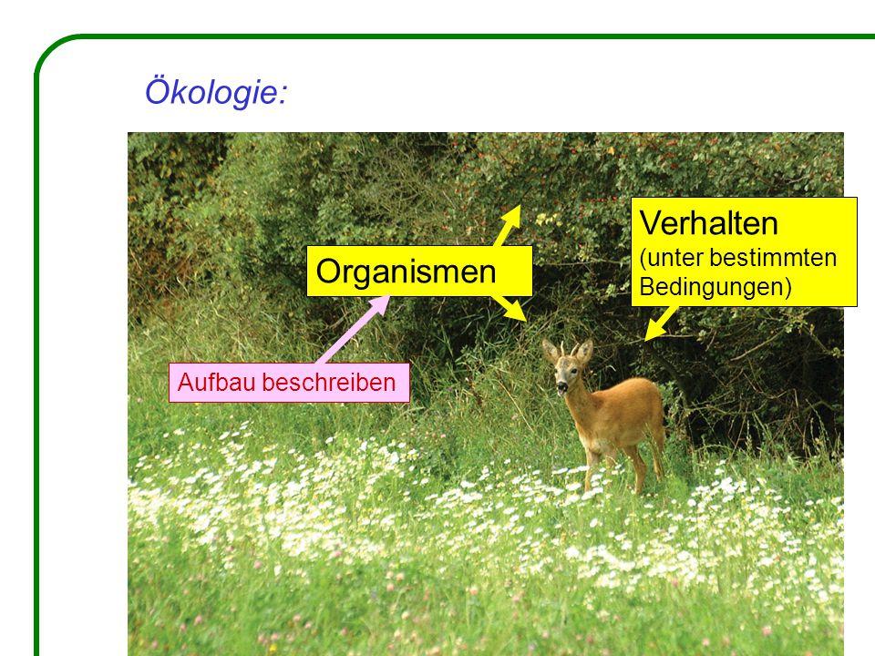 Ökologie: Organismen Verhalten (unter bestimmten Bedingungen) Aufbau beschreiben