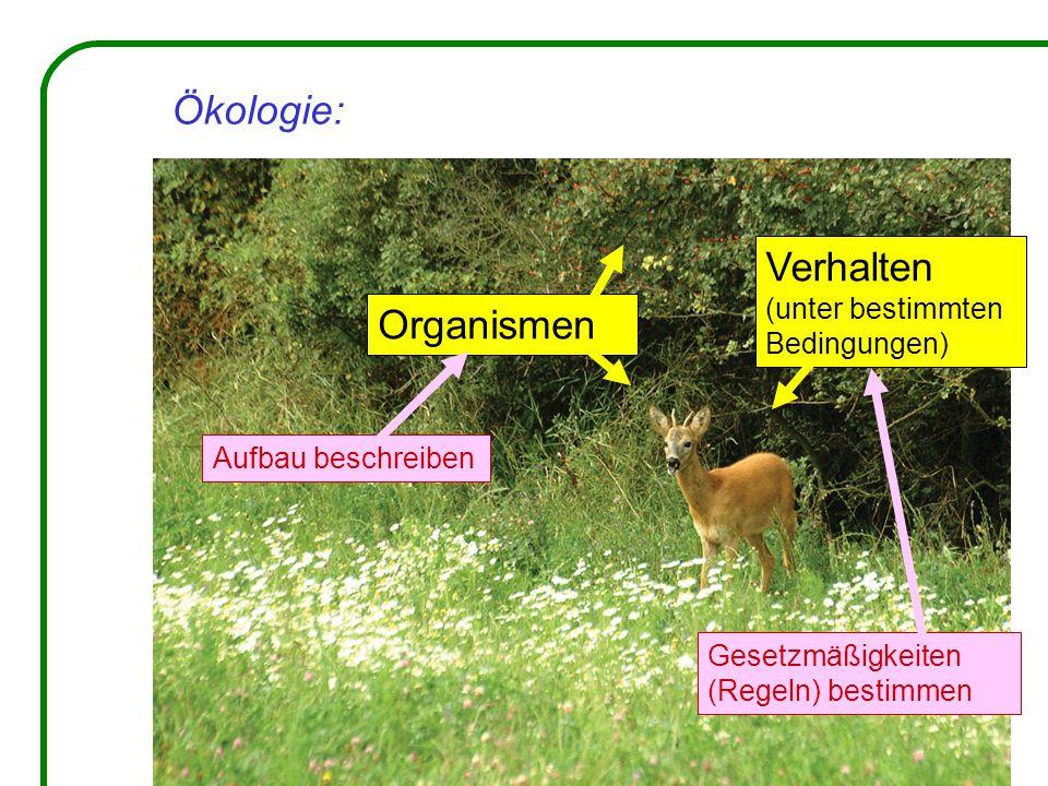 Ökologie: Organismen Verhalten (unter bestimmten Bedingungen) Aufbau beschreiben Gesetzmäßigkeiten (Regeln) bestimmen