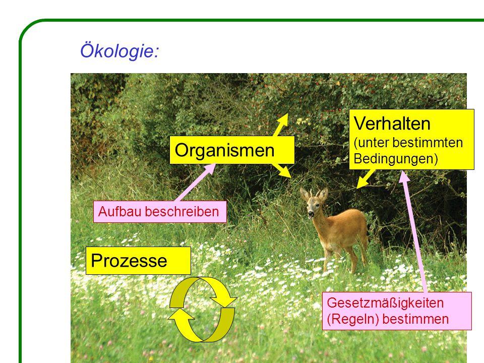 Ökologie: Organismen Verhalten (unter bestimmten Bedingungen) Prozesse Aufbau beschreiben Gesetzmäßigkeiten (Regeln) bestimmen