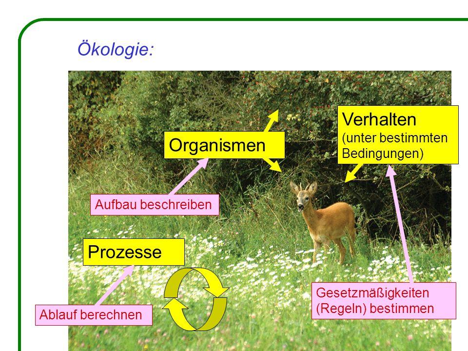 Ökologie: Organismen Verhalten (unter bestimmten Bedingungen) Prozesse Aufbau beschreiben Gesetzmäßigkeiten (Regeln) bestimmen Ablauf berechnen