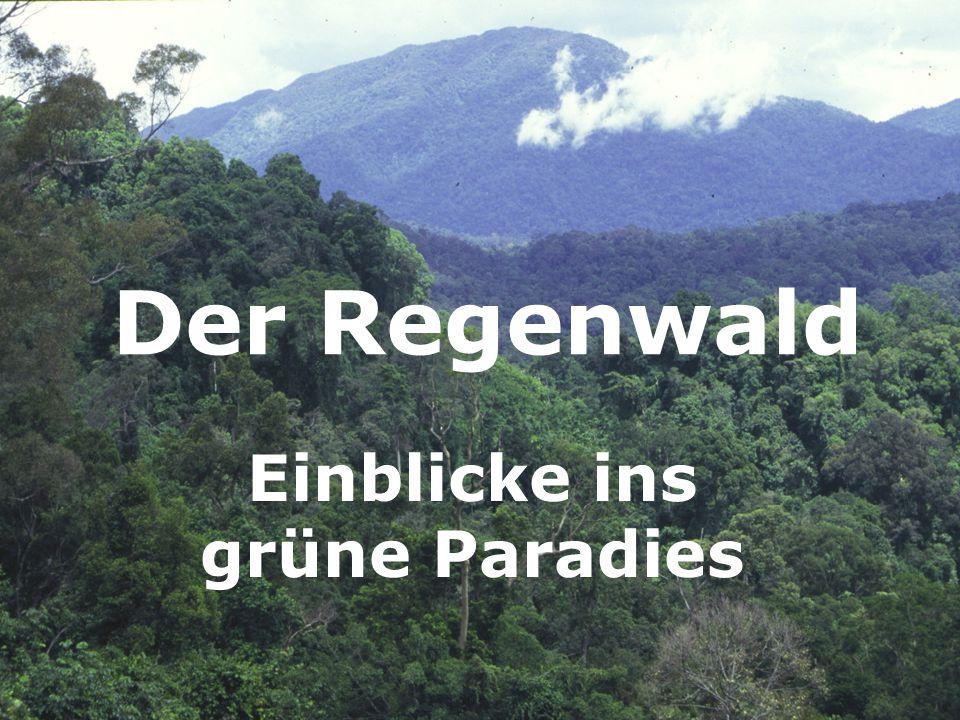 Der Regenwald Einblicke ins grüne Paradies