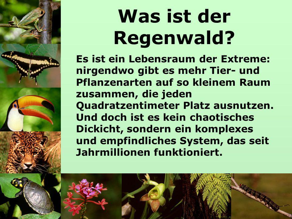 Die Grundlagen des Lebens Klima, Boden und Wasser sind die Grundlagen des Lebens, ohne die die reiche Pflanzen- und Tierwelt des Regenwaldes nicht möglich wäre.