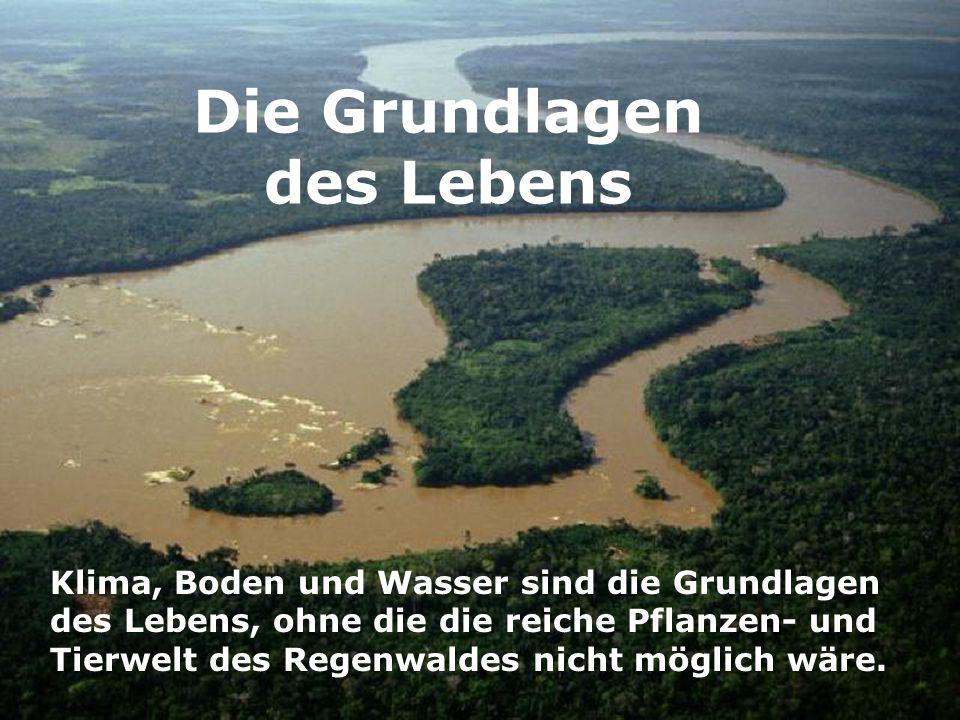 Die Grundlagen des Lebens Klima, Boden und Wasser sind die Grundlagen des Lebens, ohne die die reiche Pflanzen- und Tierwelt des Regenwaldes nicht mög
