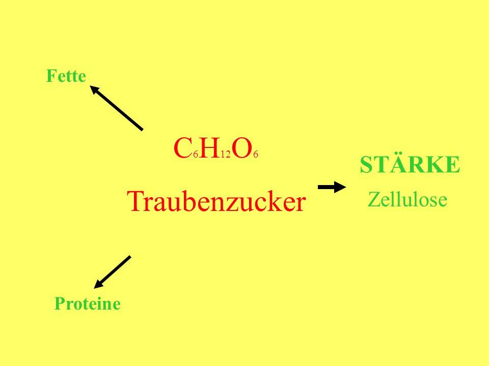 Proteine C 6 H 12 O 6 Traubenzucker STÄRKE Zellulose Fette
