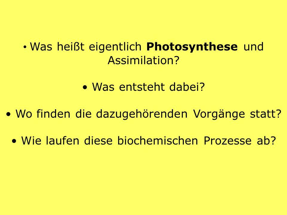 Was heißt eigentlich Photosynthese und Assimilation? Was entsteht dabei? Wo finden die dazugehörenden Vorgänge statt? Wie laufen diese biochemischen P