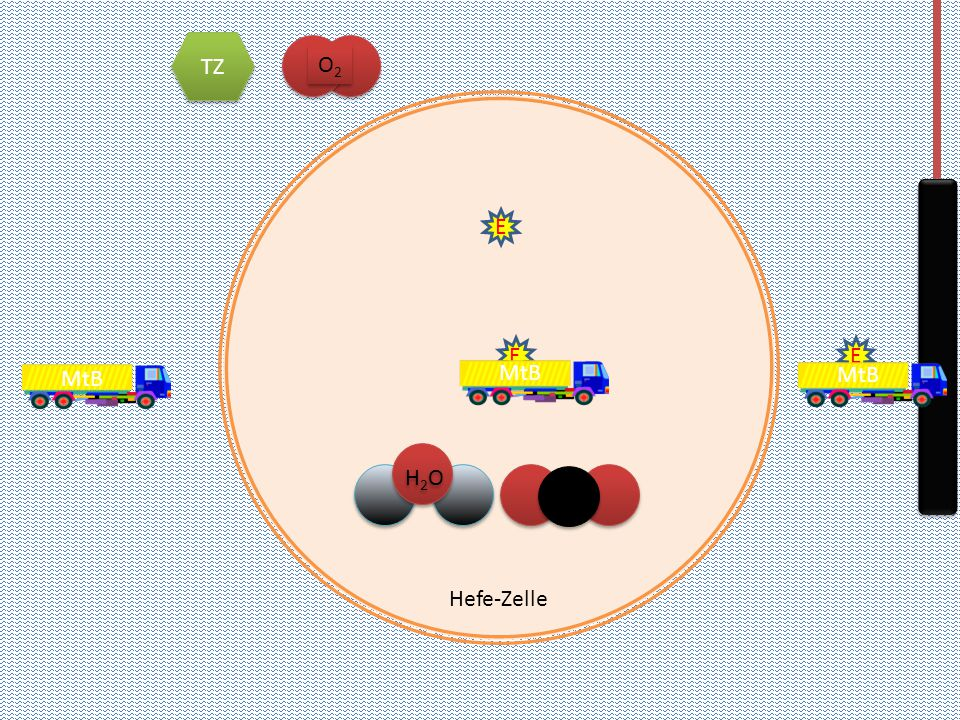 Hefe-Zelle TZ O2O2 O2O2 E CO 2 H2OH2O H2OH2O MtB E E