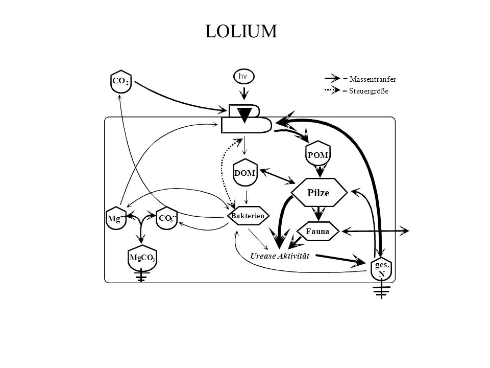 hv DOM Fauna Urease Aktivität ges. N CO 2 3 -- Mg ++ MgCO 3 Bakterien Pilze POM = Massentranfer = Steuergröße LOLIUM