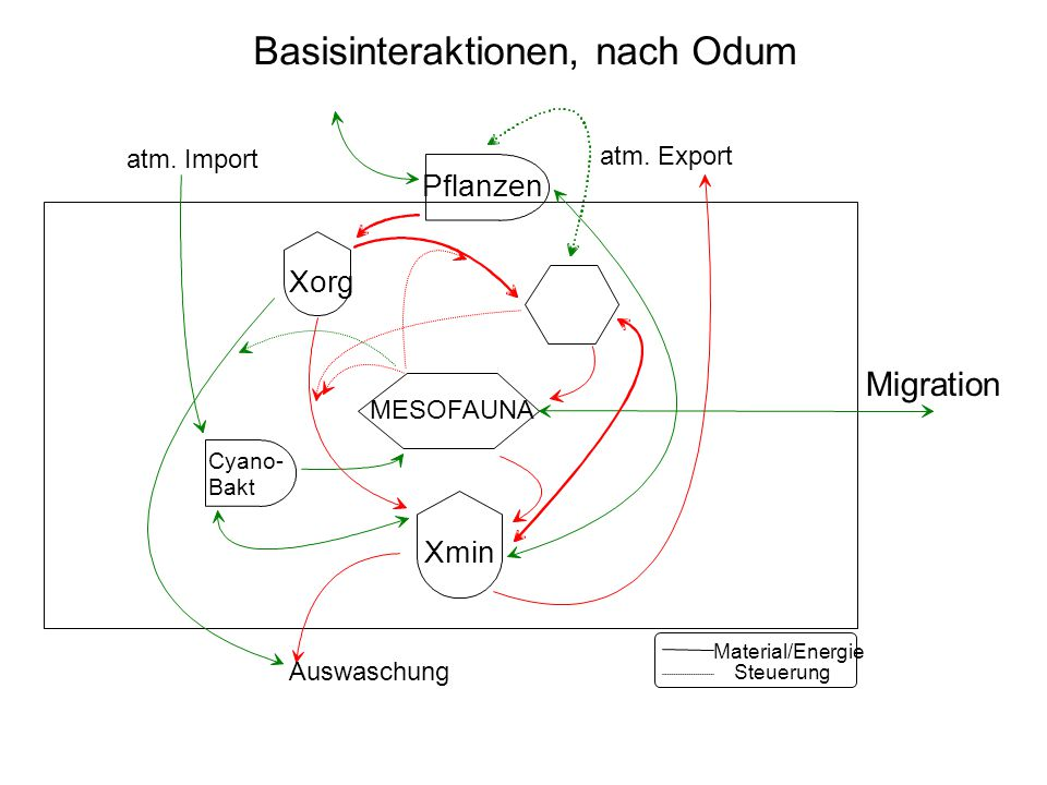 MESOFAUNA Xmin Xorg Pflanzen Steuerung Material/Energie Migration Auswaschung atm. Export atm. Import Cyano- Bakt Basisinteraktionen, nach Odum