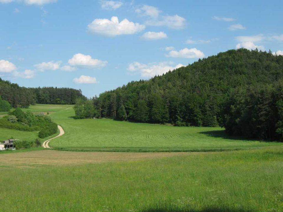 Waldspazierga ng Ein Spaziergang durch den Wald, über Wiesen und Felder mit Sinnsprüchen