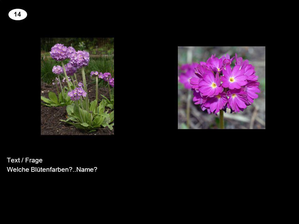Text / Frage Welche Blütenfarben ..Name 14