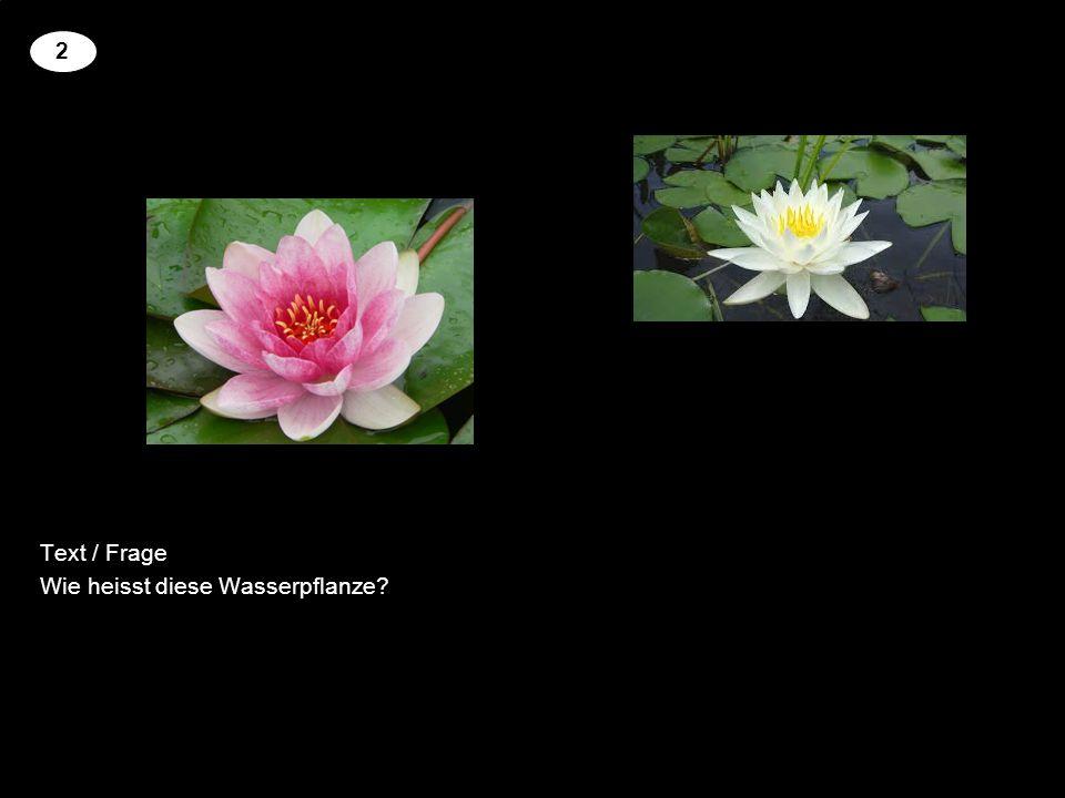 Text / Frage Name dieser Wasserpflanze? 3