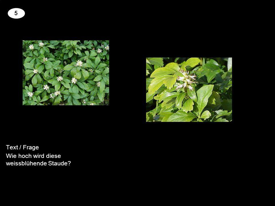 Text / Frage Wie hoch kann diese Pflanze werden? 6
