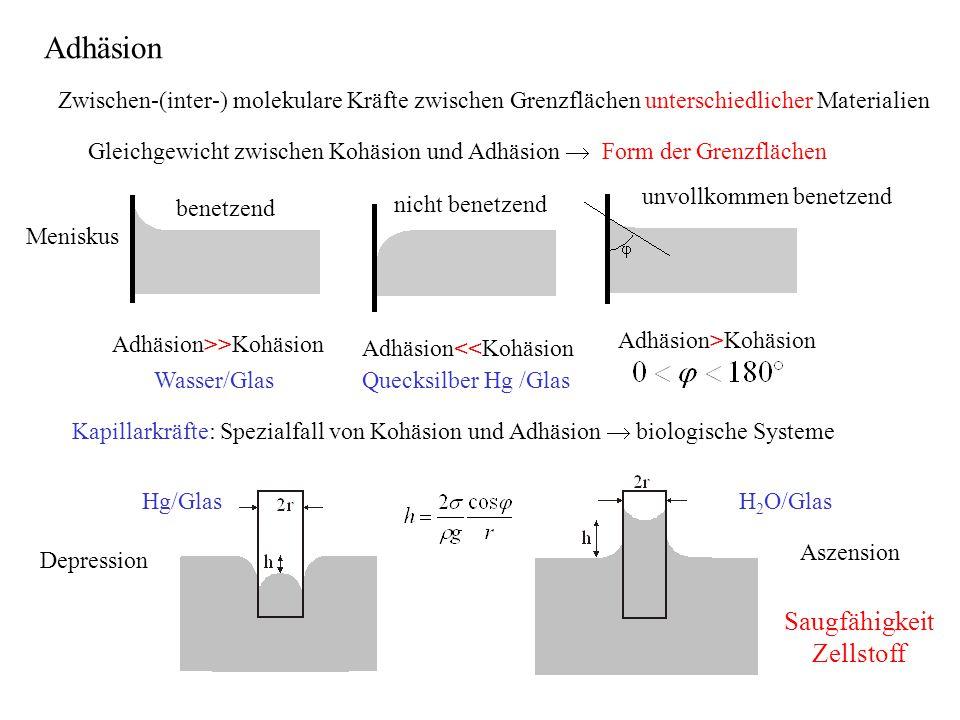 Zwischen-(inter-) molekulare Kräfte zwischen Grenzflächen unterschiedlicher Materialien Gleichgewicht zwischen Kohäsion und Adhäsion  Form der Grenzf