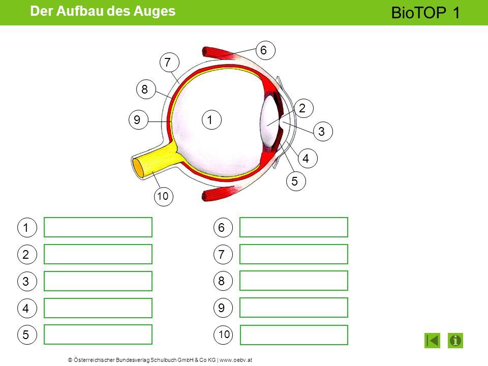 © Österreichischer Bundesverlag Schulbuch GmbH & Co KG | www.oebv.at BioTOP 1 Der Aufbau des Auges 1 2 3 4 5 6 7 8 9 10 1 2 3 4 5 6 7 9 8