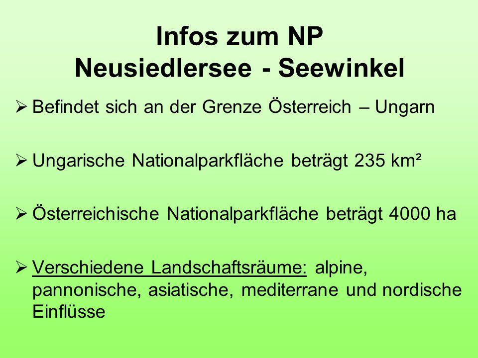Infos zum NP Neusiedlersee - Seewinkel  Befindet sich an der Grenze Österreich – Ungarn  Ungarische Nationalparkfläche beträgt 235 km²  Österreichische Nationalparkfläche beträgt 4000 ha  Verschiedene Landschaftsräume: alpine, pannonische, asiatische, mediterrane und nordische Einflüsse