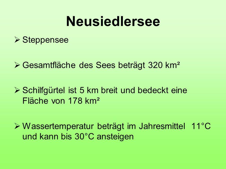 Neusiedlersee  Steppensee  Gesamtfläche des Sees beträgt 320 km²  Schilfgürtel ist 5 km breit und bedeckt eine Fläche von 178 km²  Wassertemperatur beträgt im Jahresmittel 11°C und kann bis 30°C ansteigen