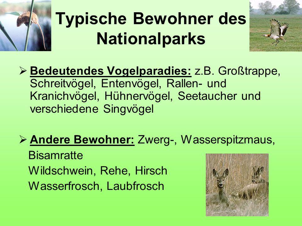 Typische Bewohner des Nationalparks  Bedeutendes Vogelparadies: z.B. Großtrappe, Schreitvögel, Entenvögel, Rallen- und Kranichvögel, Hühnervögel, See