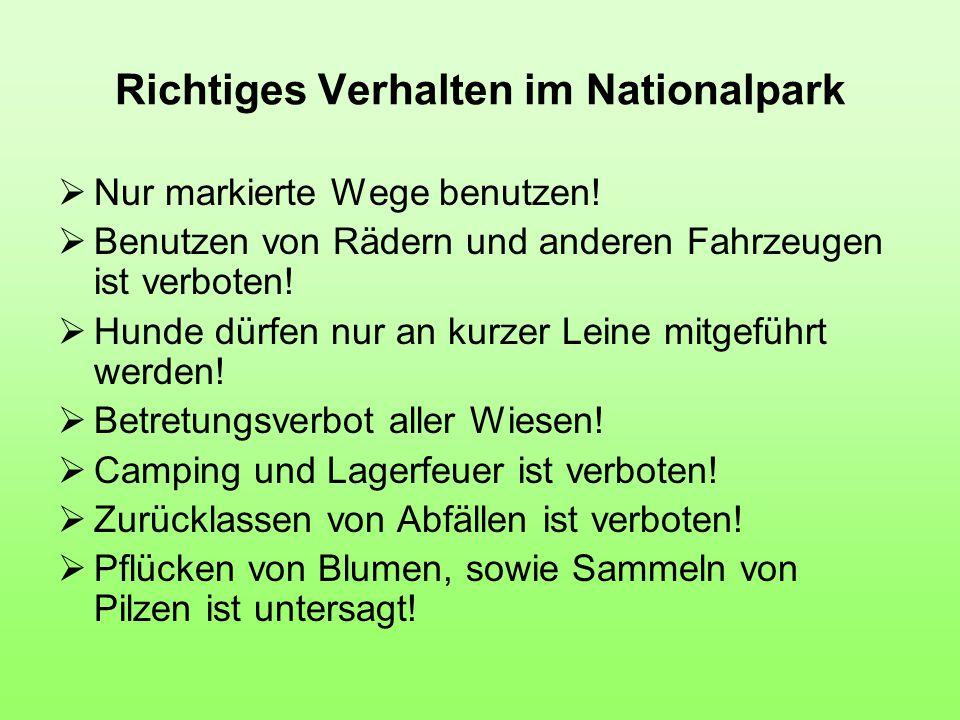 Richtiges Verhalten im Nationalpark  Nur markierte Wege benutzen!  Benutzen von Rädern und anderen Fahrzeugen ist verboten!  Hunde dürfen nur an ku