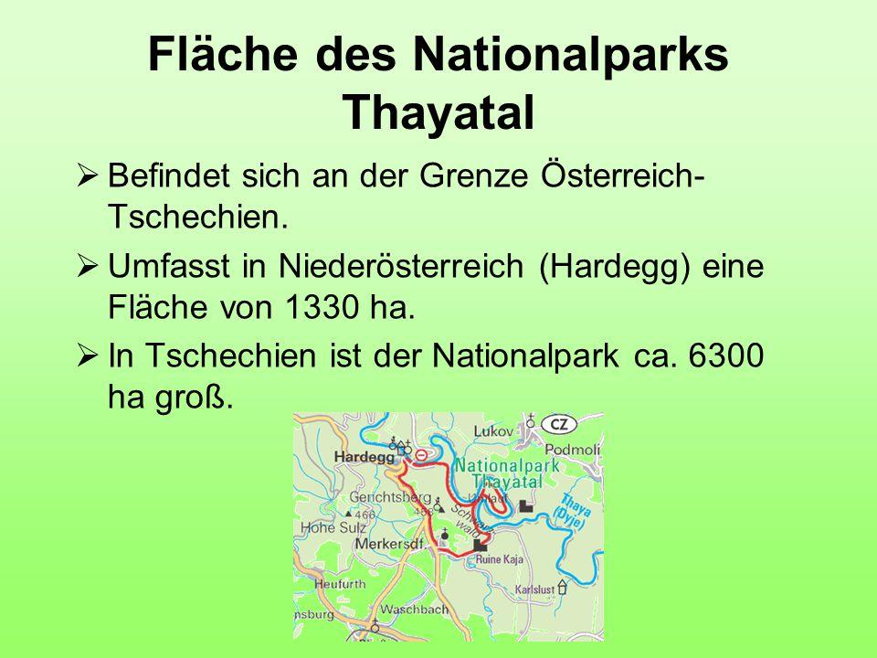 Fläche des Nationalparks Thayatal  Befindet sich an der Grenze Österreich- Tschechien.  Umfasst in Niederösterreich (Hardegg) eine Fläche von 1330 h