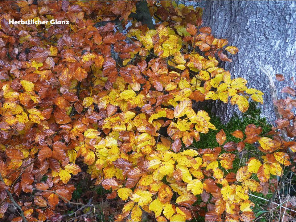 Herbstlicher Glanz
