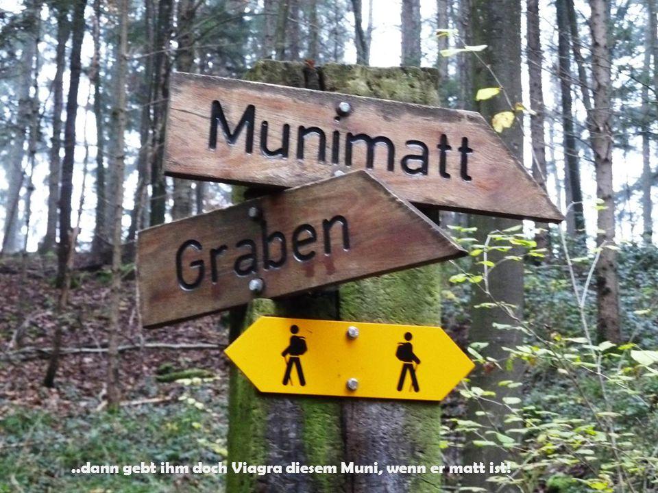 Kunst mitten im Wald