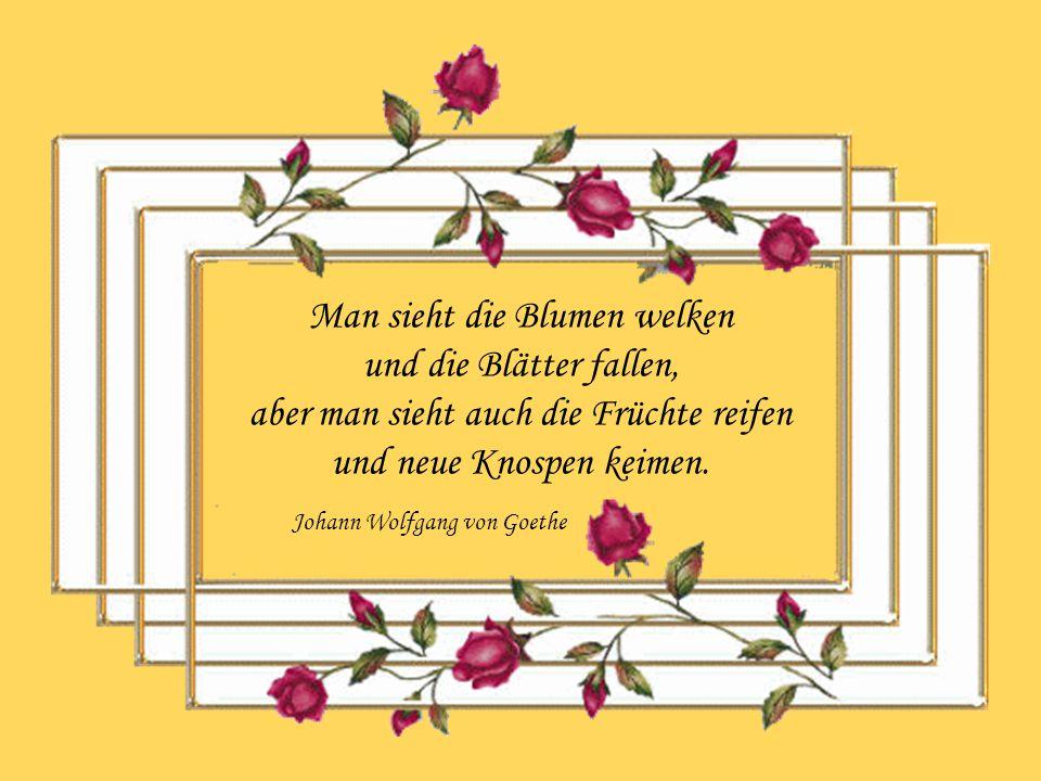 Man sieht die Blumen welken und die Blätter fallen, aber man sieht auch die Früchte reifen und neue Knospen keimen.
