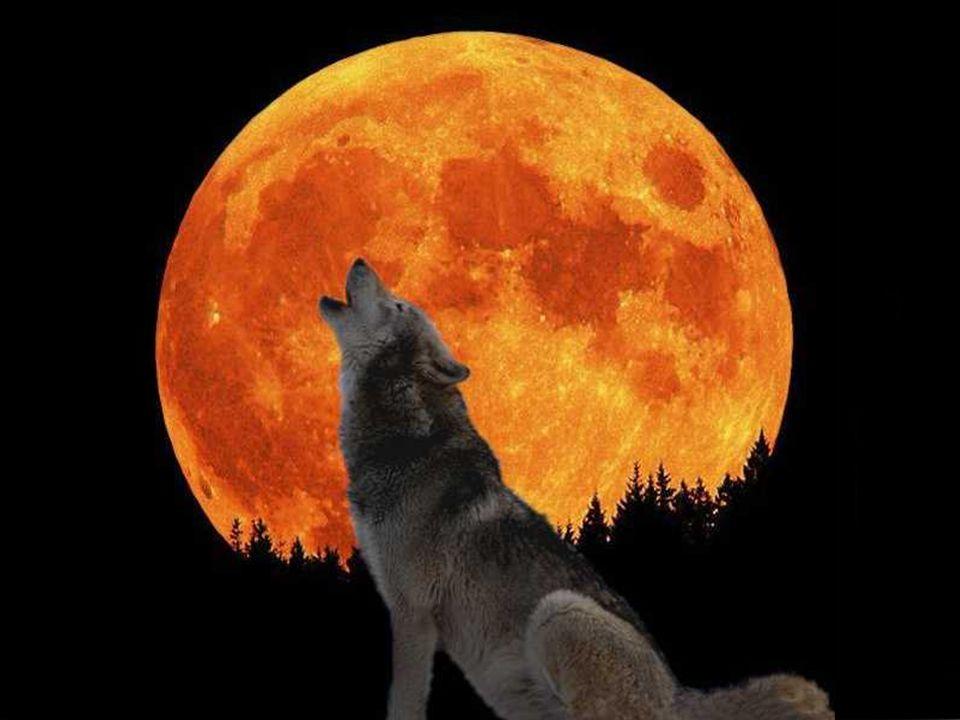 Dance of wolves