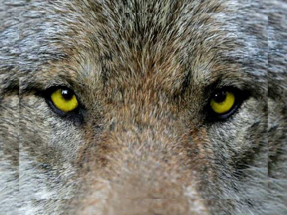Musik :Loreena McKennitt Titel : Dance of Wolves