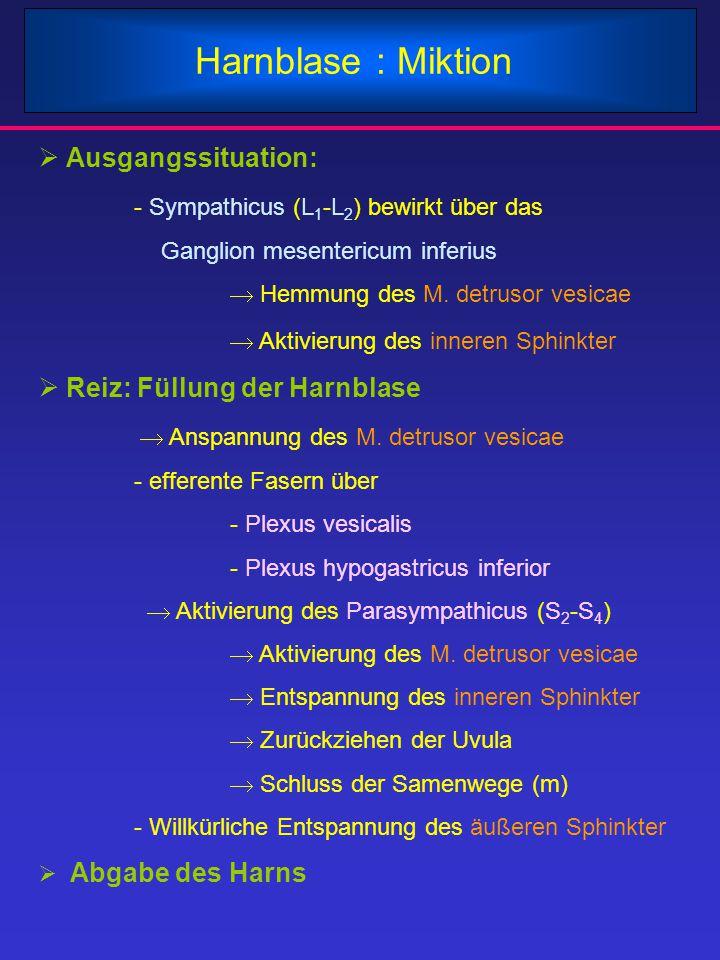 Harnblase : Miktion  Ausgangssituation: - Sympathicus (L 1 -L 2 ) bewirkt über das Ganglion mesentericum inferius  Hemmung des M. detrusor vesicae 