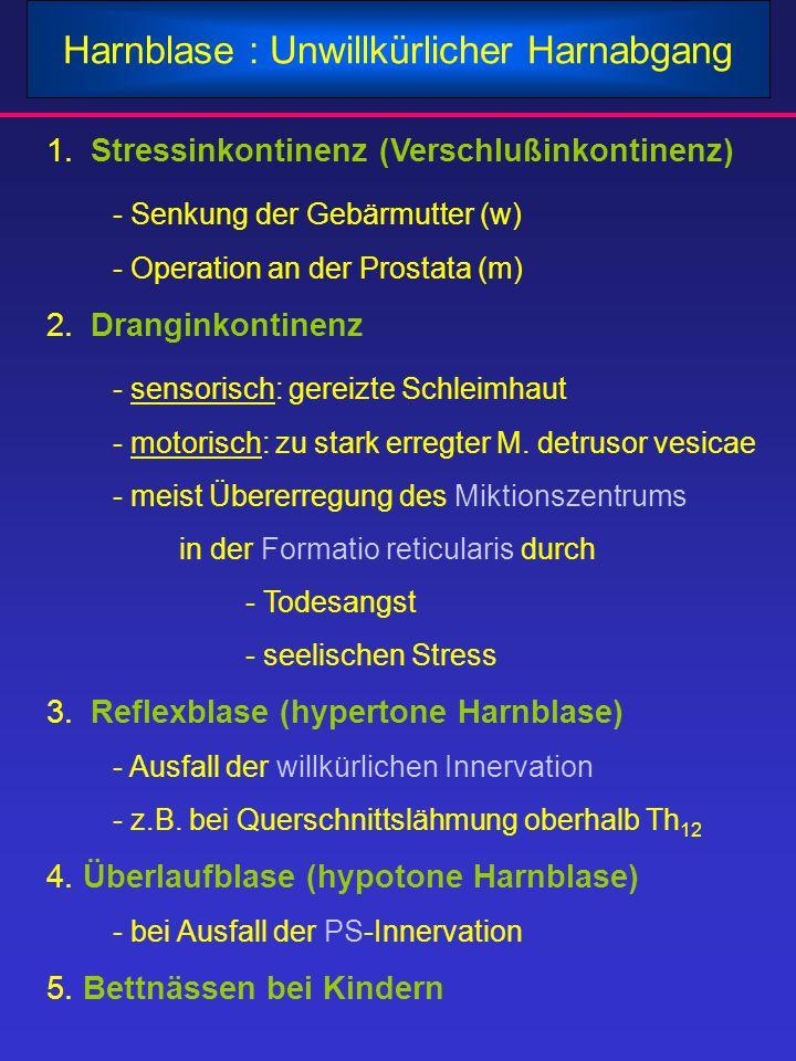 Harnblase : Unwillkürlicher Harnabgang 1.Stressinkontinenz (Verschlußinkontinenz) - Senkung der Gebärmutter (w) - Operation an der Prostata (m) 2.Dran