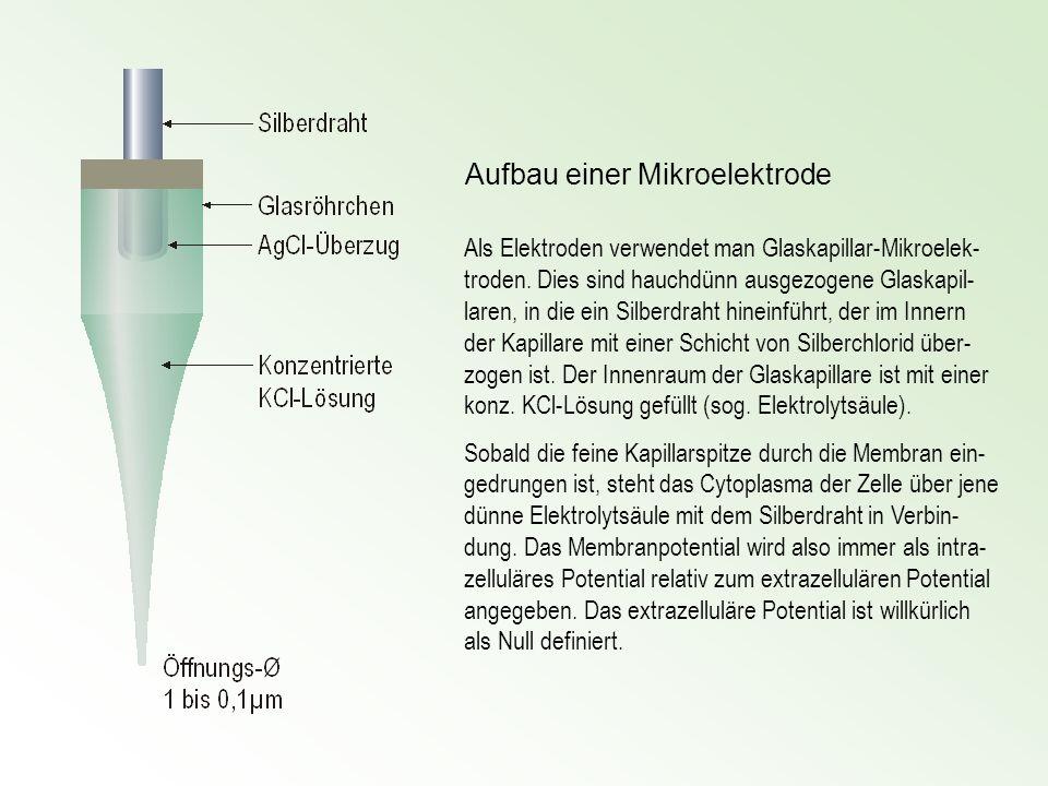Riechsensillen Bestimmung der während eines gegebenen Zeitintervalls absor- bierten, Tritium markierten Duft- moleküle (z.